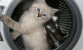 Типові поломки пральних машин